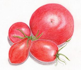 Tomatohp
